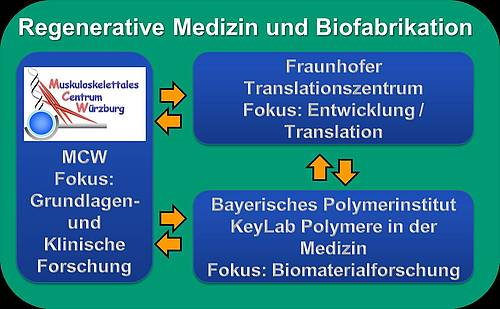 Portrayal of the connection between research and translational structures within the field of regenerative medicine and biofabrication