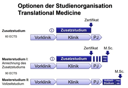 Studium, Optionen der Organisation